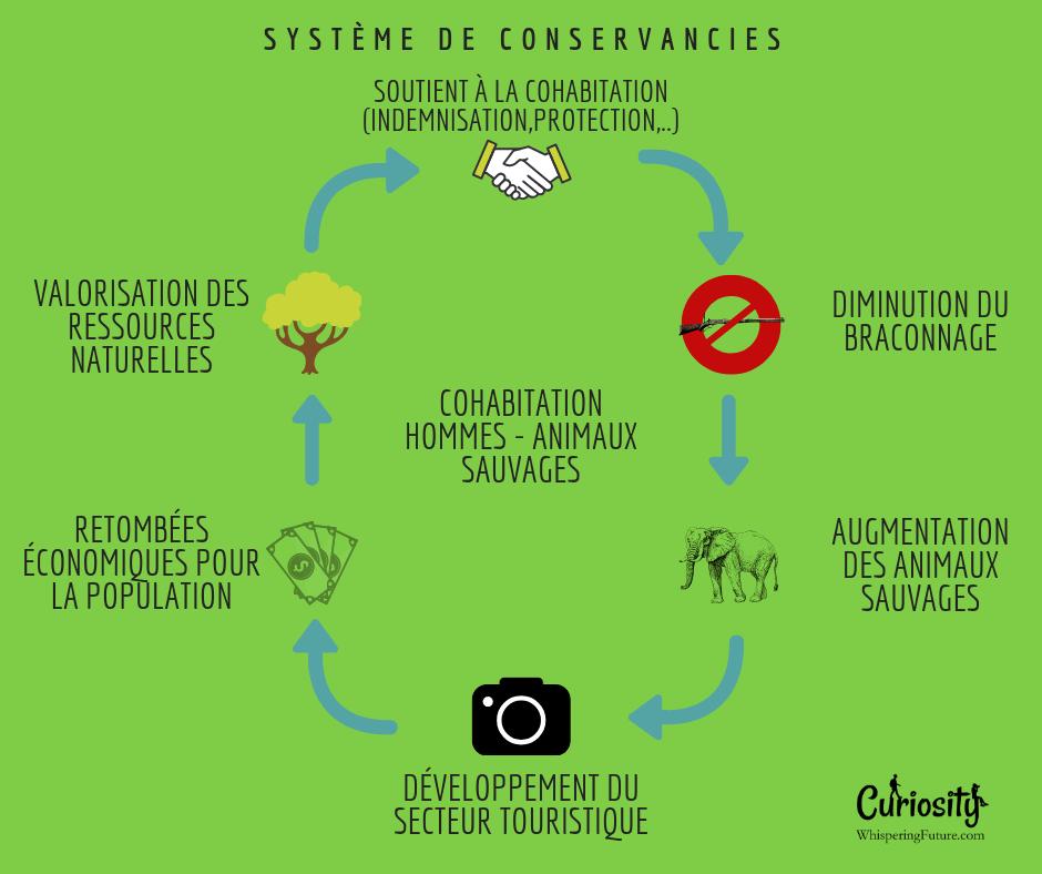 Infographie à propos des Conservancies en Namibie